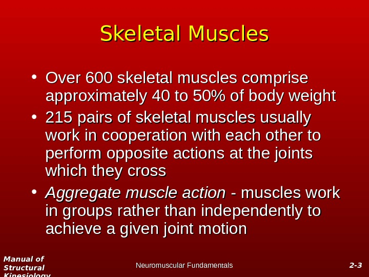 Manual of Structural Kinesiology Neuromuscular Fundamentals 2 -2 - 33 Skeletal Muscles • Over 600 skeletal
