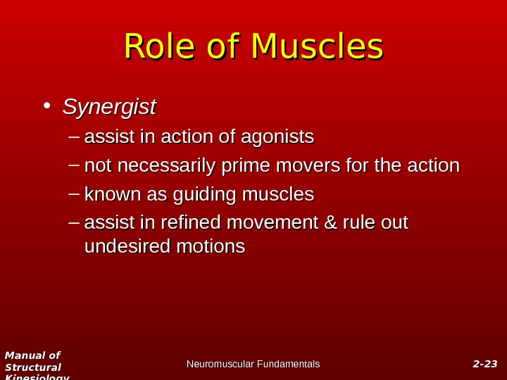 Manual of Structural Kinesiology Neuromuscular Fundamentals 2 -2 - 2323 Role of Muscles • Synergist –