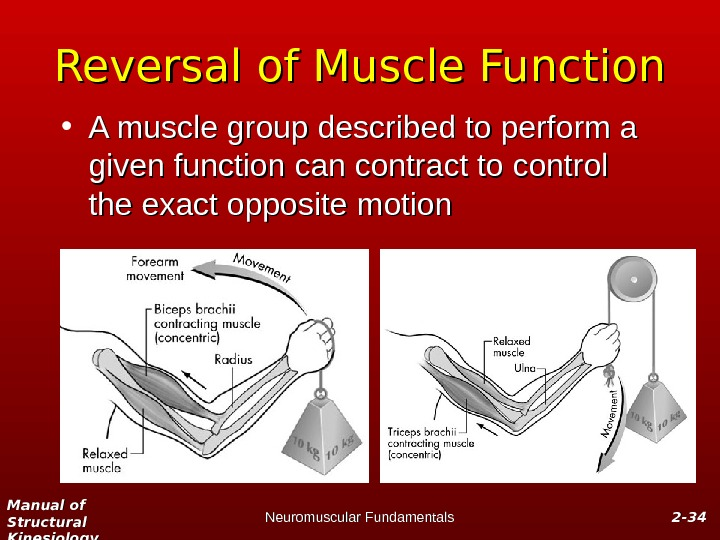 Manual of Structural Kinesiology Neuromuscular Fundamentals 2 -2 - 3434 Reversal of Muscle Function • A
