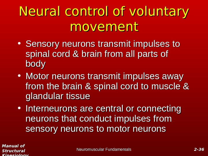 Manual of Structural Kinesiology Neuromuscular Fundamentals 2 -2 - 3636 Neural control of voluntary movement •