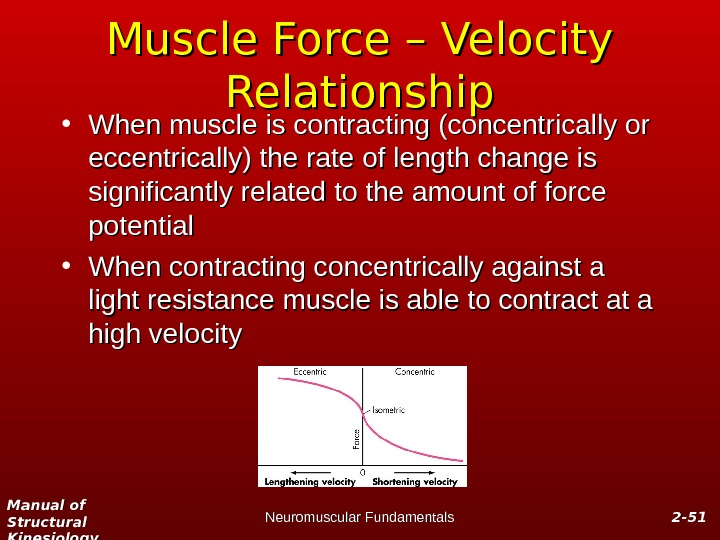 Manual of Structural Kinesiology Neuromuscular Fundamentals 2 -2 - 5151 Muscle Force – Velocity Relationship •
