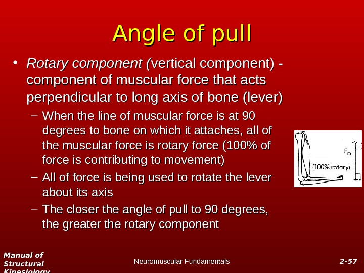 Manual of Structural Kinesiology Neuromuscular Fundamentals 2 -2 - 5757 Angle of pull • Rotary component