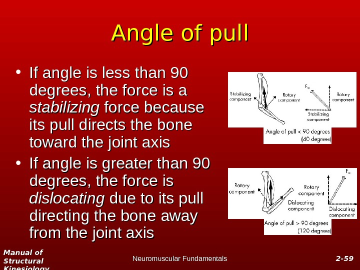Manual of Structural Kinesiology Neuromuscular Fundamentals 2 -2 - 5959 Angle of pull • If angle