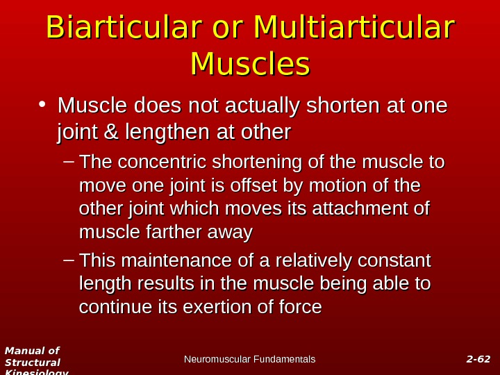 Manual of Structural Kinesiology Neuromuscular Fundamentals 2 -2 - 6262 Biarticular or Multiarticular Muscles • Muscle
