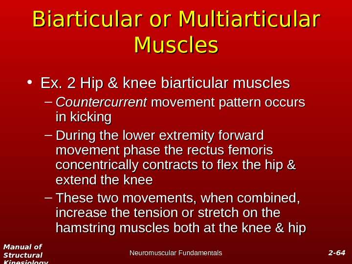 Manual of Structural Kinesiology Neuromuscular Fundamentals 2 -2 - 6464 Biarticular or Multiarticular Muscles • Ex.