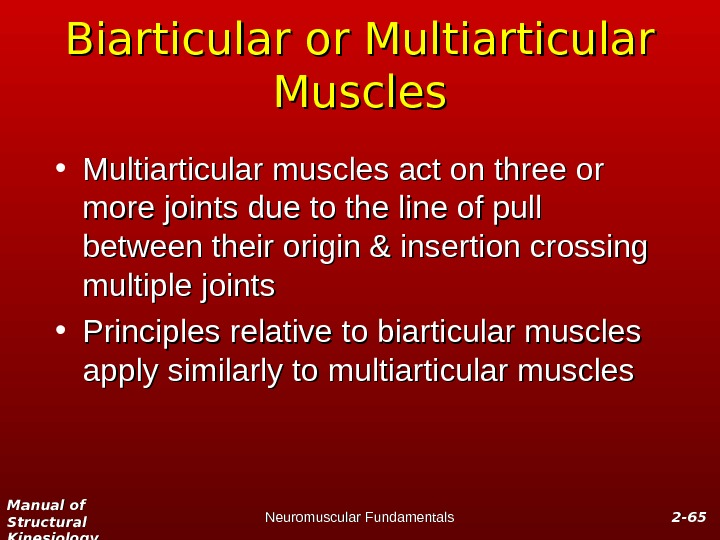 Manual of Structural Kinesiology Neuromuscular Fundamentals 2 -2 - 6565 Biarticular or Multiarticular Muscles • Multiarticular