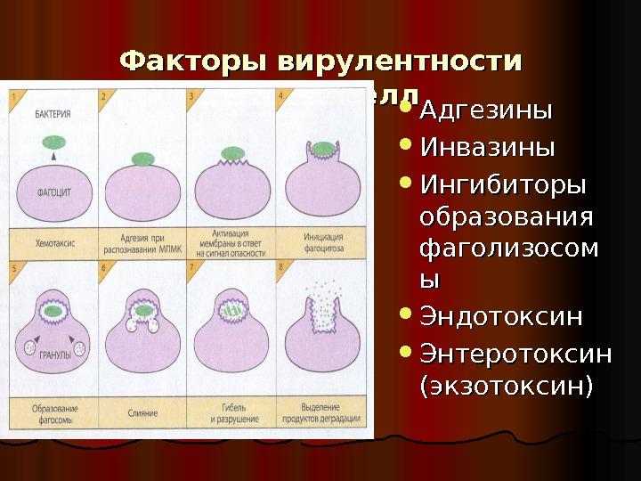 Энтеротоксин