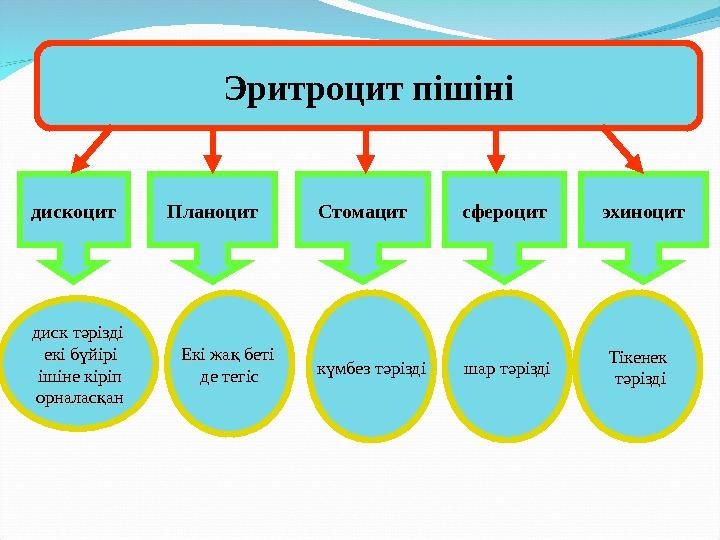 Сфигмокардиограф