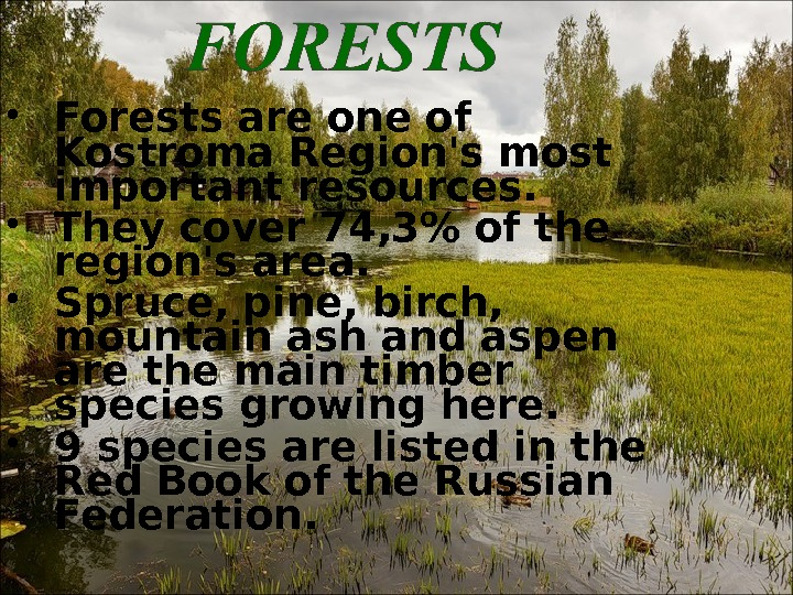 Forests are one of Kostroma Region's most important resources.  They cover 74, 3 of