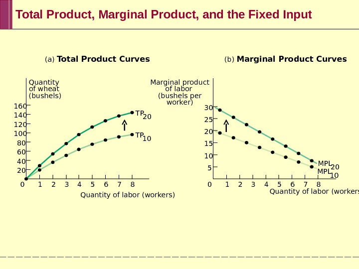 (a) Total Product Curves (b) Marginal Product Curves Marginal product of labor (bushels per worker)Quantity of