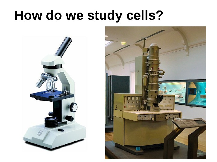 How do we study cells?
