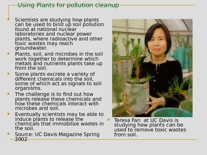 Using Plants for pollution cleanup Scientists are studying how plants can be used to bind up