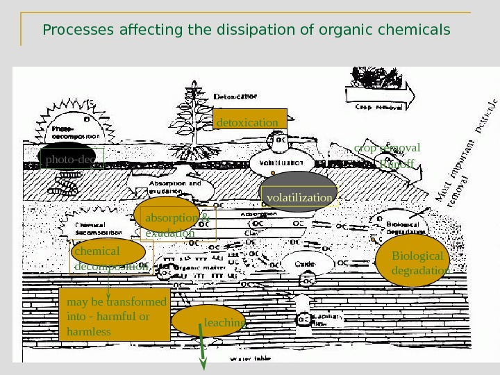 Processes affecting the dissipation of organic chemicals  photo-dec. absorption & exudation  volatilization Biological degradation