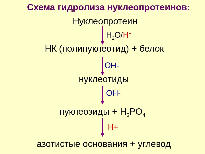 Нуклеопротеин