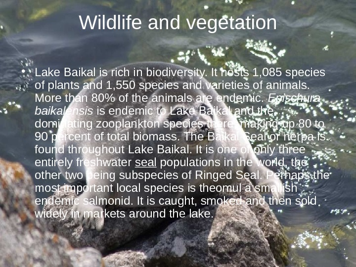 Wildlife and vegetation • Lake Baikal is rich in biodiversity. It hosts 1, 085