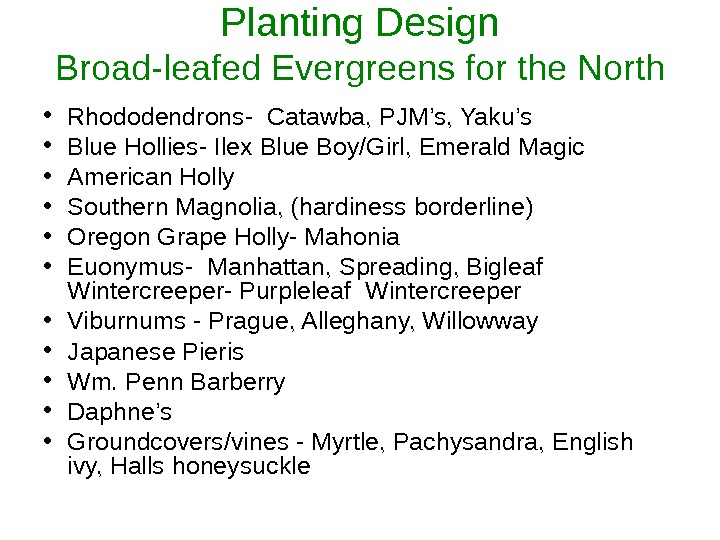 Planting Design Broad-leafed Evergreens for the North • Rhododendrons- Catawba, PJM's, Yaku's • Blue Hollies- Ilex