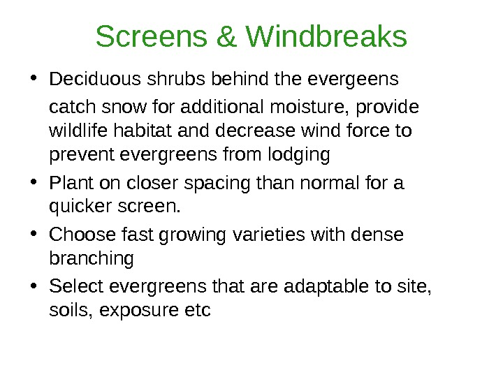 Screens & Windbreaks • Deciduous shrubs behind the evergeens catch snow for additional moisture, provide wildlife