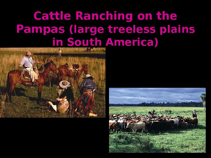 Cattle Ranching on the Pampas (large treeless plains in South America)