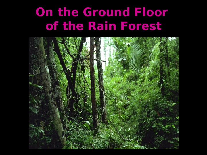 On the Ground Floor of the Rain Forest