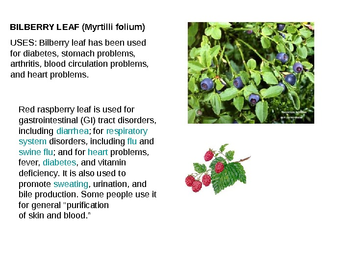 BILBERRY LEAF (Myrtilli folium) USES: Bilberry leaf has been used for diabetes, stomach problems,  arthritis,
