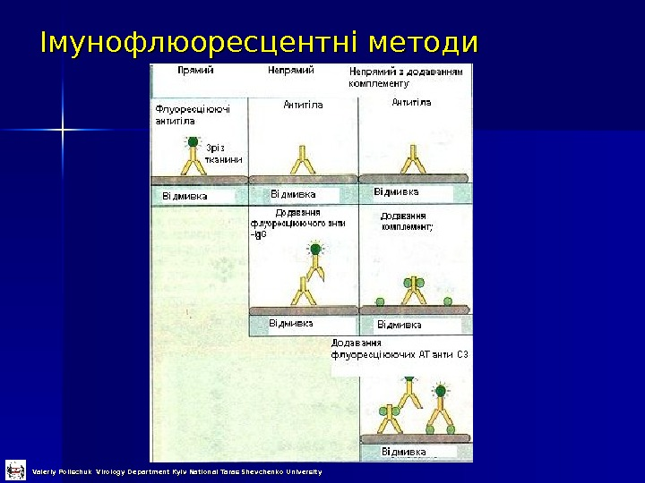 Імунофлюоресцентні методи Valeriy Polischuk Virology Department Kyiv National Taras Shevchenko University