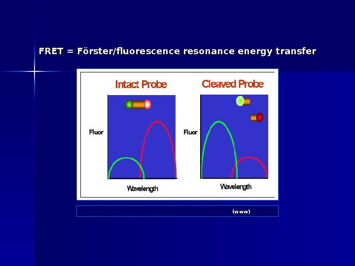 FRET = Förster/fluorescence resonance energy transfer ABI: Real-Time PCR vs Traditional PCR (www)