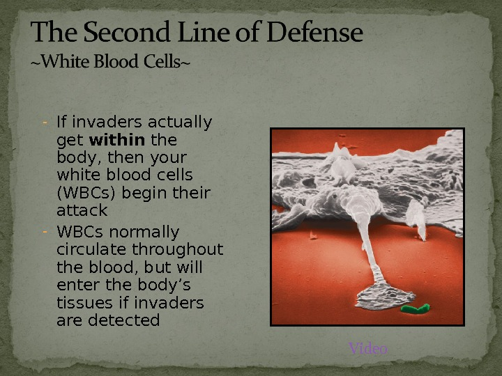 - If invaders actually get within the body, then your white blood cells (WBCs) begin their