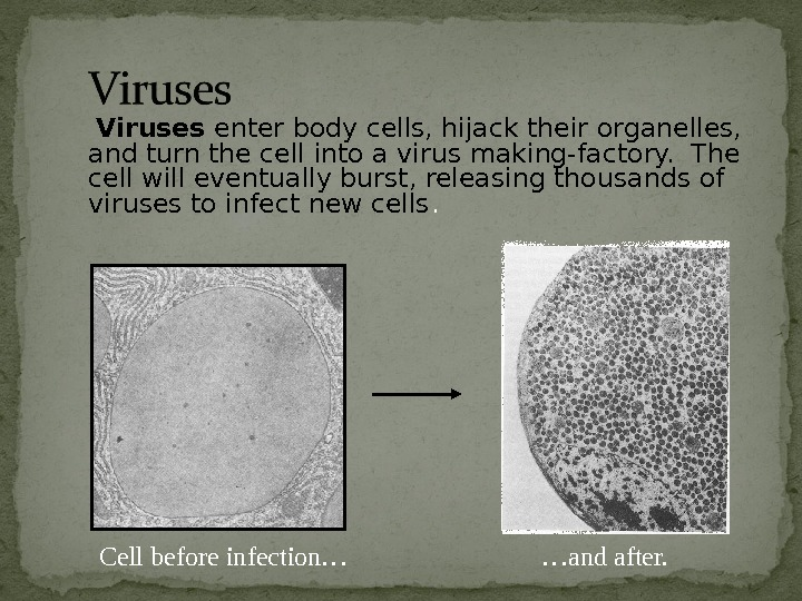 Viruses enter body cells, hijack their organelles,  and turn the cell into a
