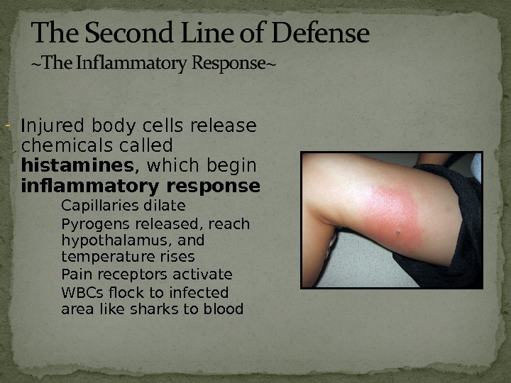 - Injured body cells release chemicals called histamines , which begin inflammatory response - Capillaries dilate
