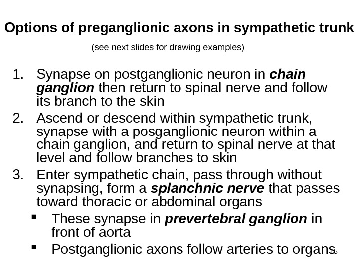 15 Options of preganglionic axons in sympathetic trunk 1. Synapse on postganglionic neuron in chain ganglion