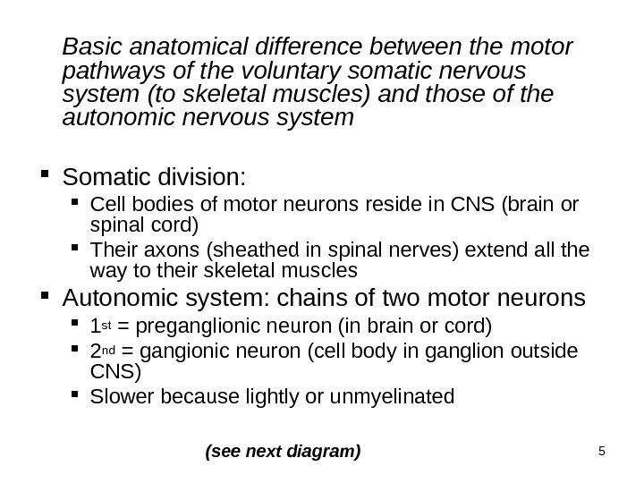 5 Basic anatomical difference between the motor pathways of the voluntary somatic nervous system (to skeletal