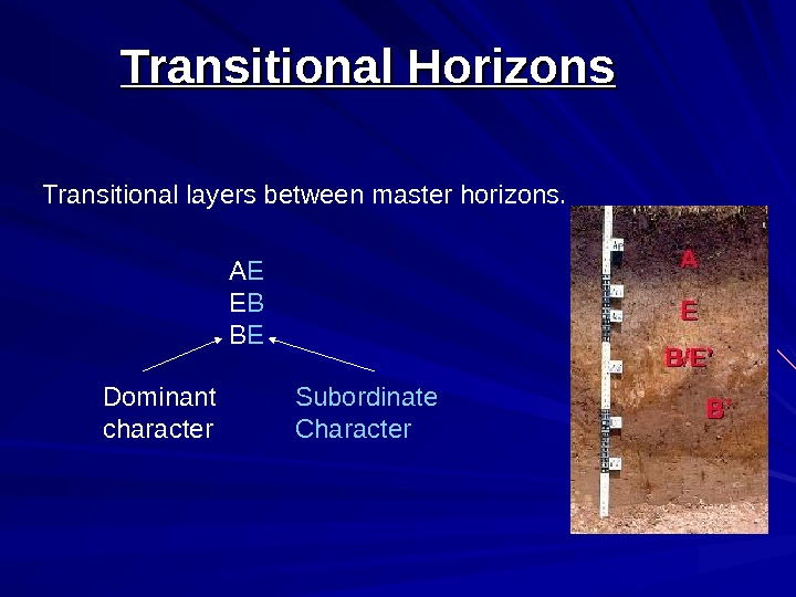 Transitional Horizons Transitional layers between master horizons. A E E B B E Dominant