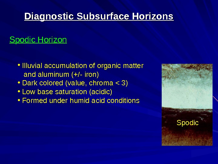 Diagnostic Subsurface Horizons Spodic Horizon Spodic •  Illuvial accumulation of organic matter and