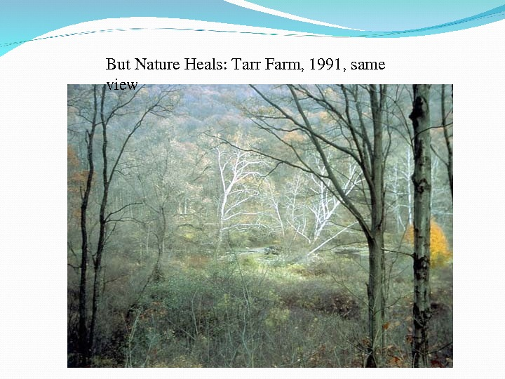But. Nature. Heals: Tarr. Farm, 1991, same view