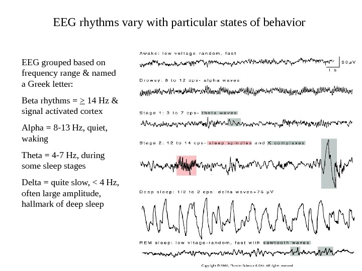 EEG rhythms vary with particular states of behavior EEG grouped based on frequency range