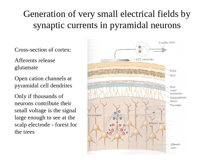 Generation of very small electrical fields by synaptic currents in pyramidal neurons Cross-section of