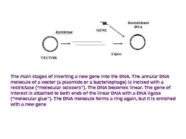 The main stages of inserting a new gene into the DNA. The annular DNA molecule of