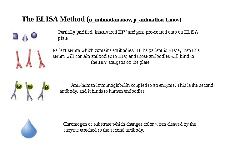 The ELISA Method ( n_animation. mov, p_animation 1. mov) Partially purified, inactivated HIV ntigens