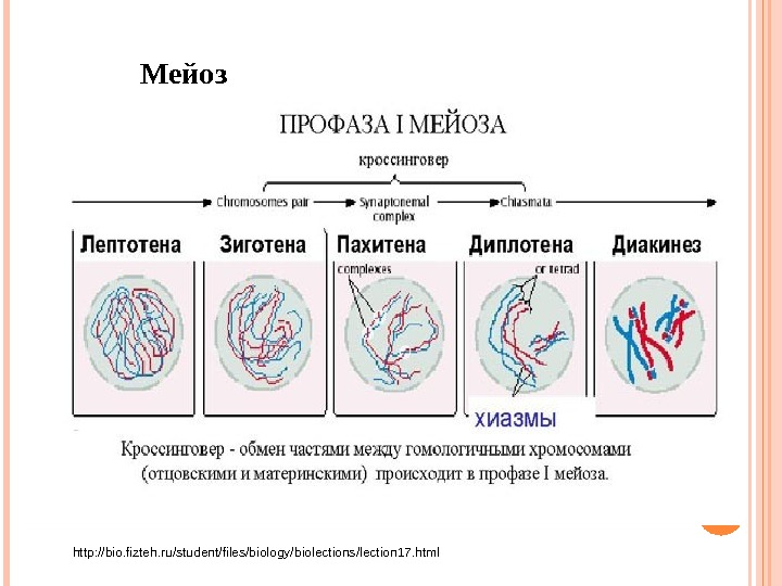 Мейоз http: //bio. fizteh. ru/student/files/biology/biolections/lection 17. html