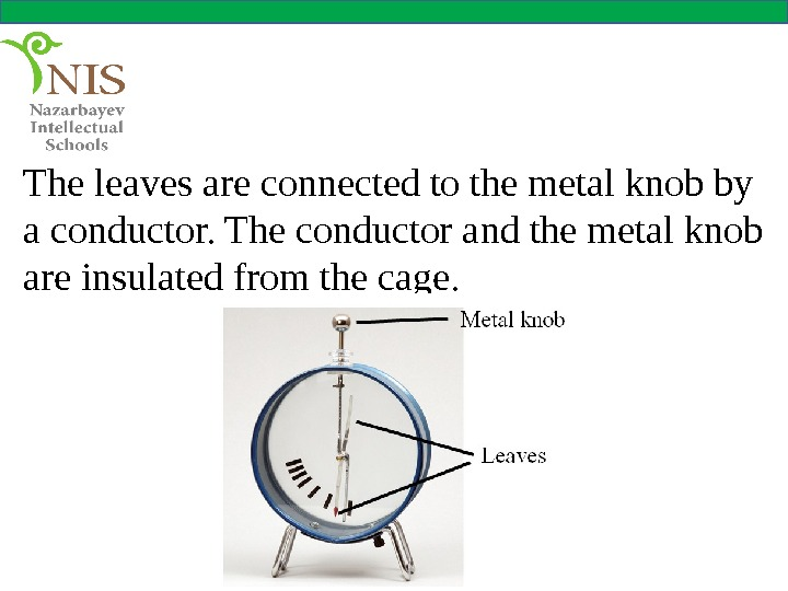 The leaves are connected to the metal knob by a conductor. The conductor and the metal