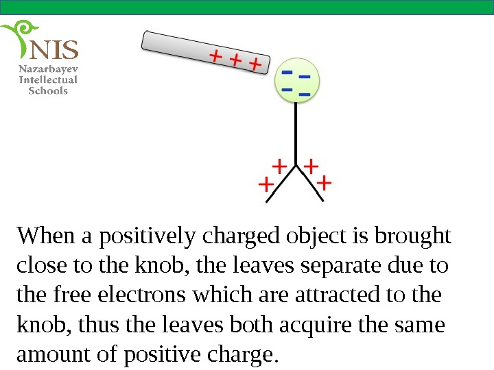 When a positively charged object is brought close to the knob, the leaves separate due to
