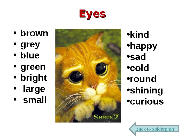 Eyes • brown • grey • blue • green • bright •  large •