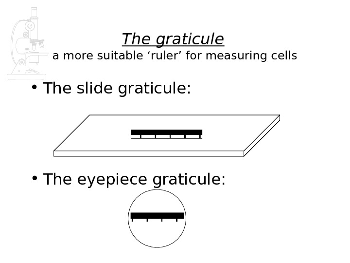 The graticule  a more suitable 'ruler' for measuring cells • The slide graticule:  •