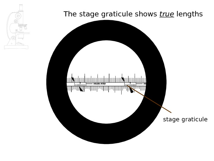 The stage graticule shows true lengths stage graticule