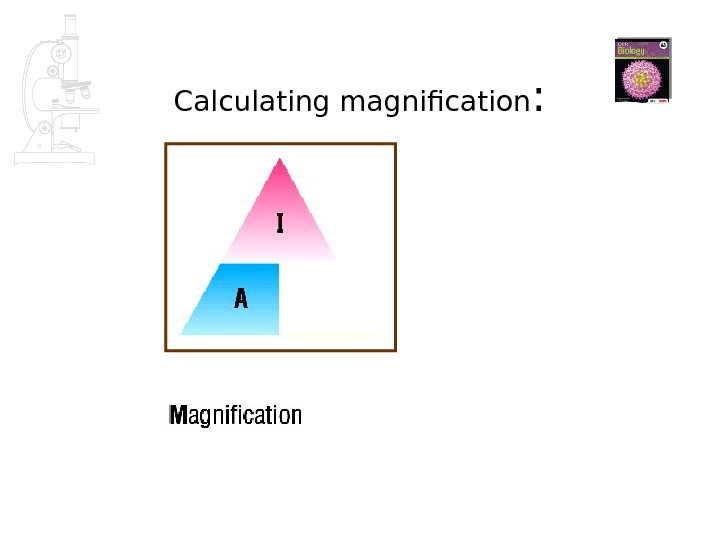 Calculating magnification :