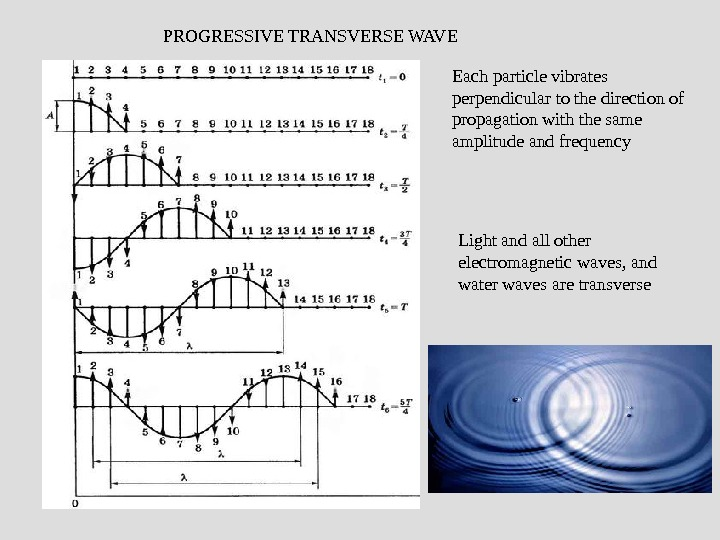 PROGRESSIVE TRANSVERSE WAVE Each particle vibrates perpendicular to the direction of propagation with the