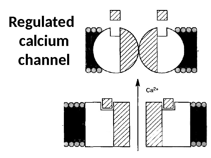 Regulated calcium channel