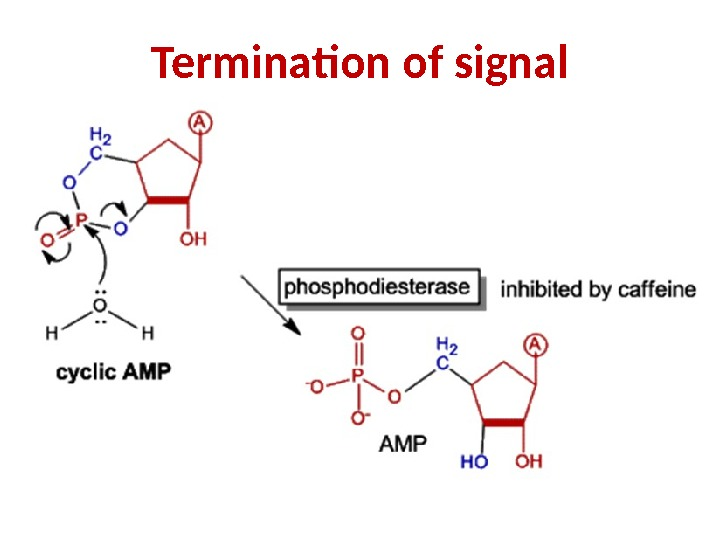 Termination of signal