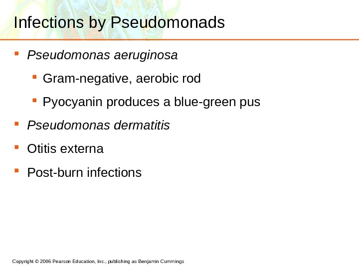 Copyright © 2006 Pearson Education, Inc. , publishing as Benjamin Cummings Infections by Pseudomonads Pseudomonas aeruginosa