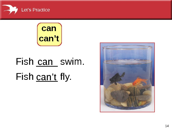 14 Fish ____ swim. Fish ____ fly.  can can't. Let's Practice